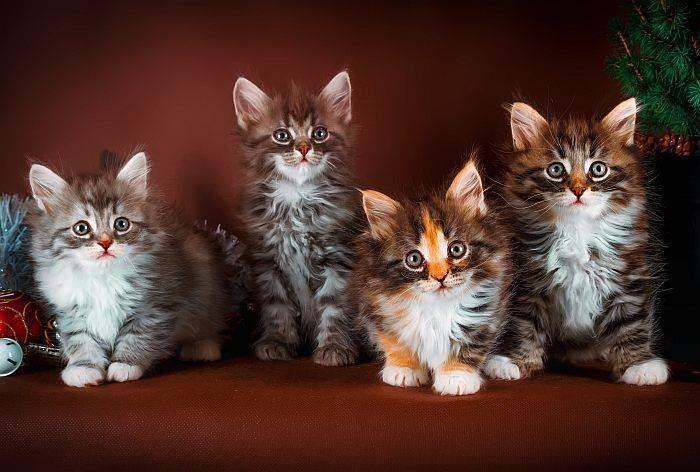 7 причин, почему кот постоянно просит есть и что делать