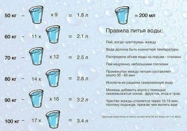 Сколько воды в день должна пить собака?