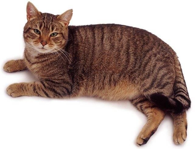 У кота сильно урчит в животе что делать