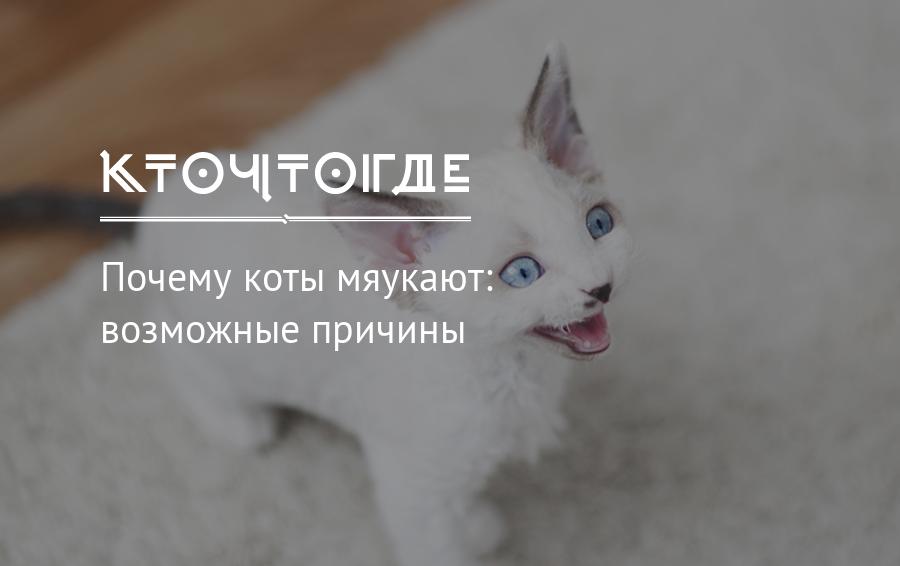 Почему кошки мяукают после родов, после еды, во сне, что делать если кошка жалобно мяукает | кошки - кто они?