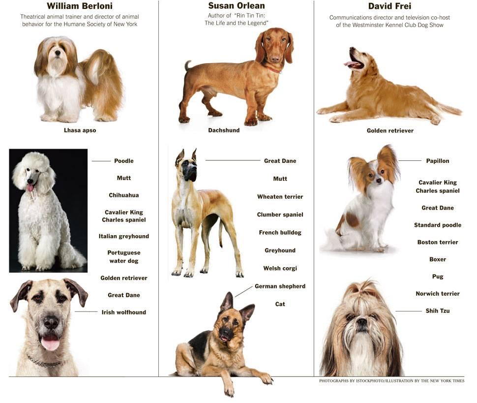 Породы собак среднего размера для квартиры и дома