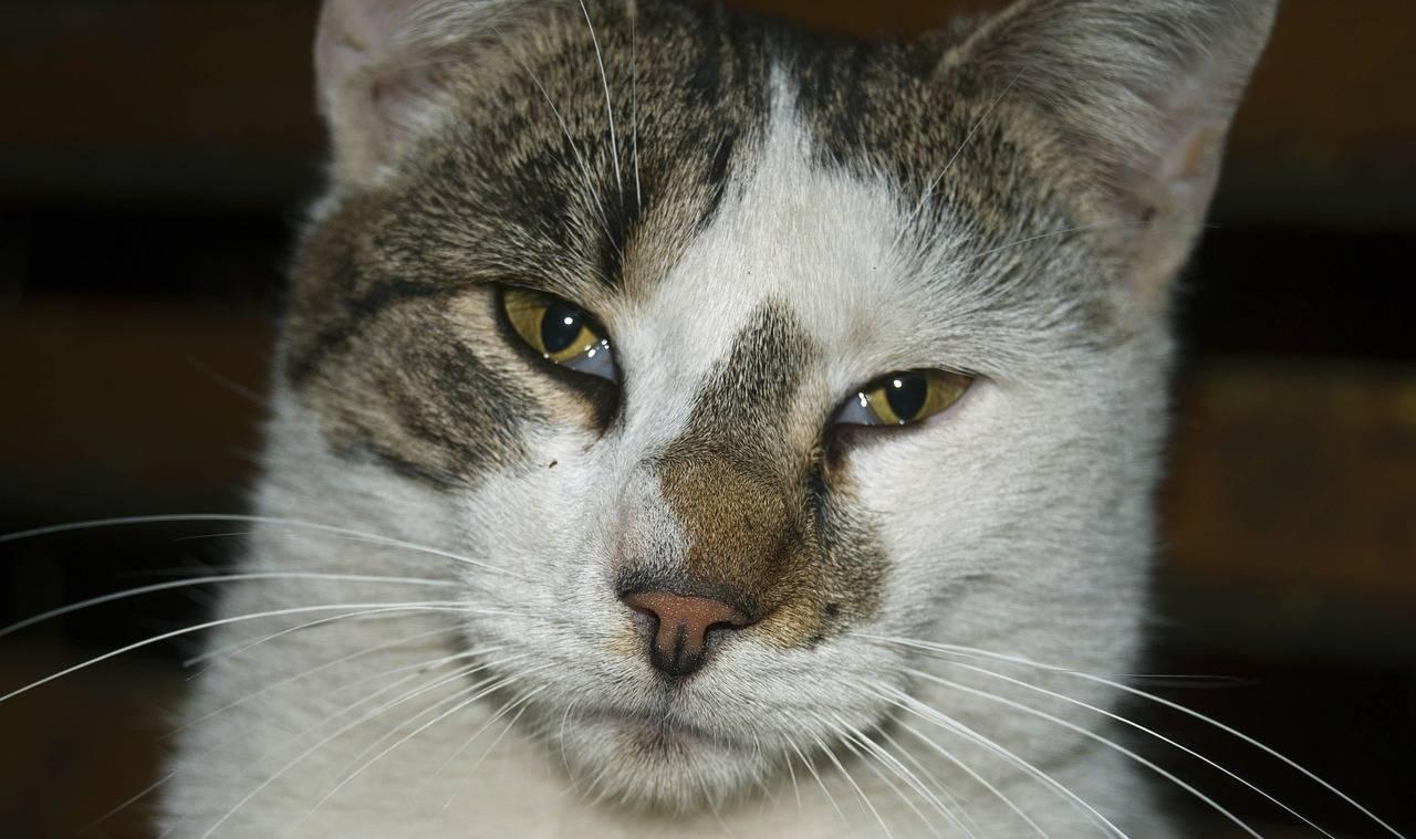 У кошки слезится один глаз: что делать, возможные причины