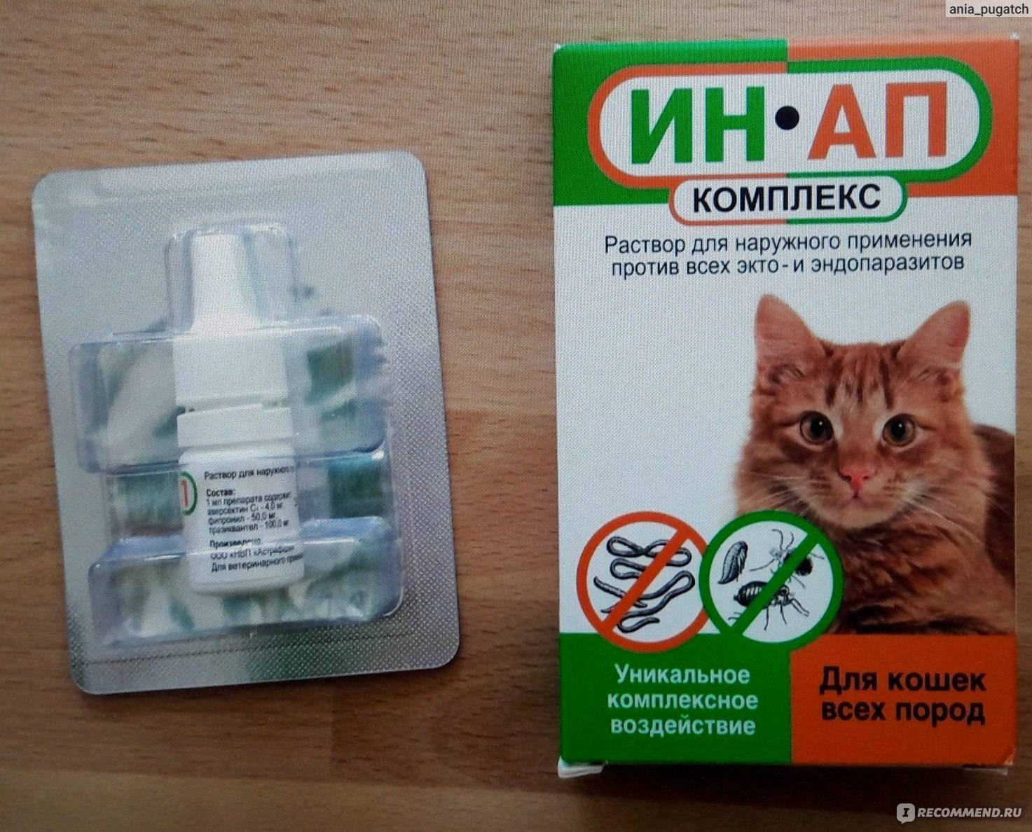 Средство от блох для кошек: эффективные таблетки, спреи, лучшие капли на холку