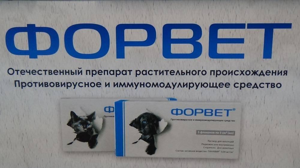 Противовирусные препараты для кошек