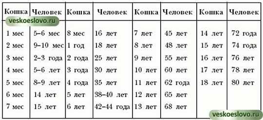 До какого возраста может рожать кошка - oozoo.ru