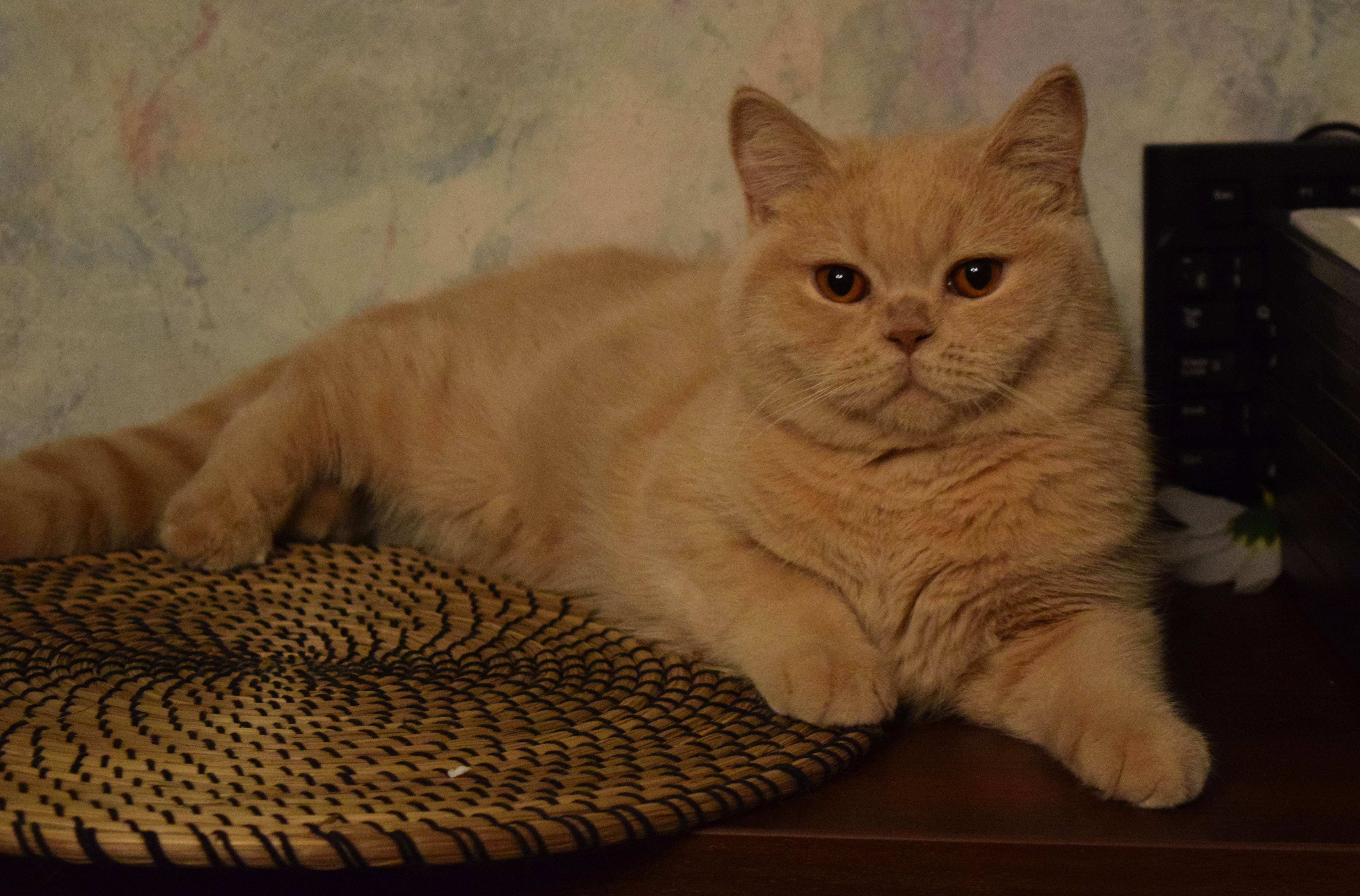 Основные правила кошачьей генетики