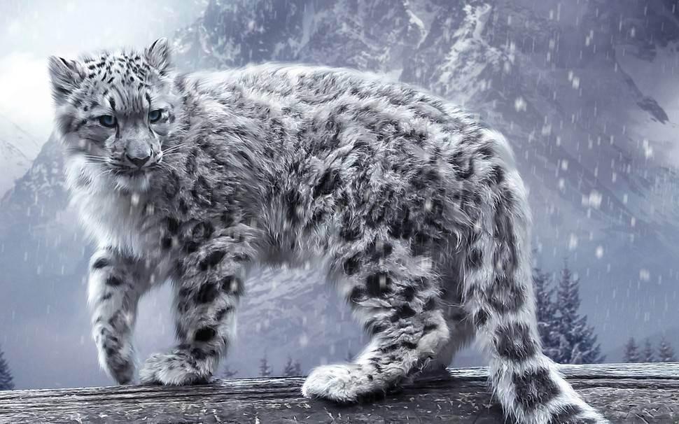 Китайская кошка: принцесса гобийских степей и тибетских гор