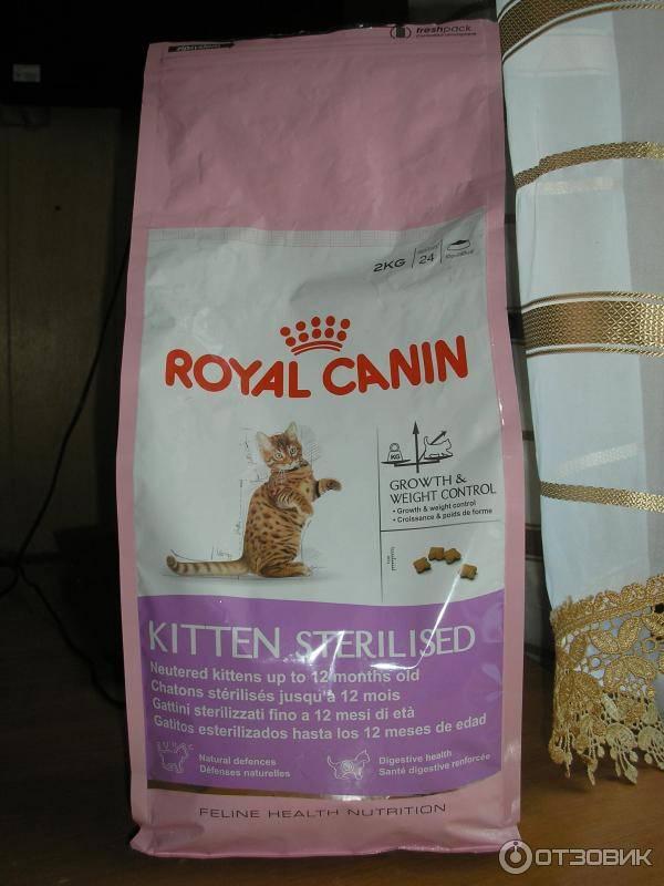 Корм для котят, какой корм лучше выбрать?