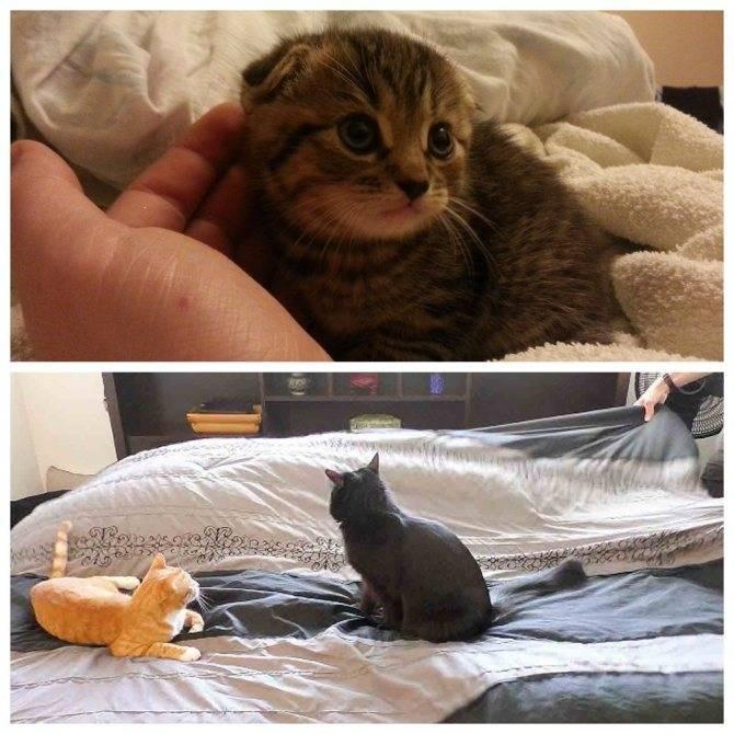 Что делать, если кошка начала гадить на кровать, возможные причины
