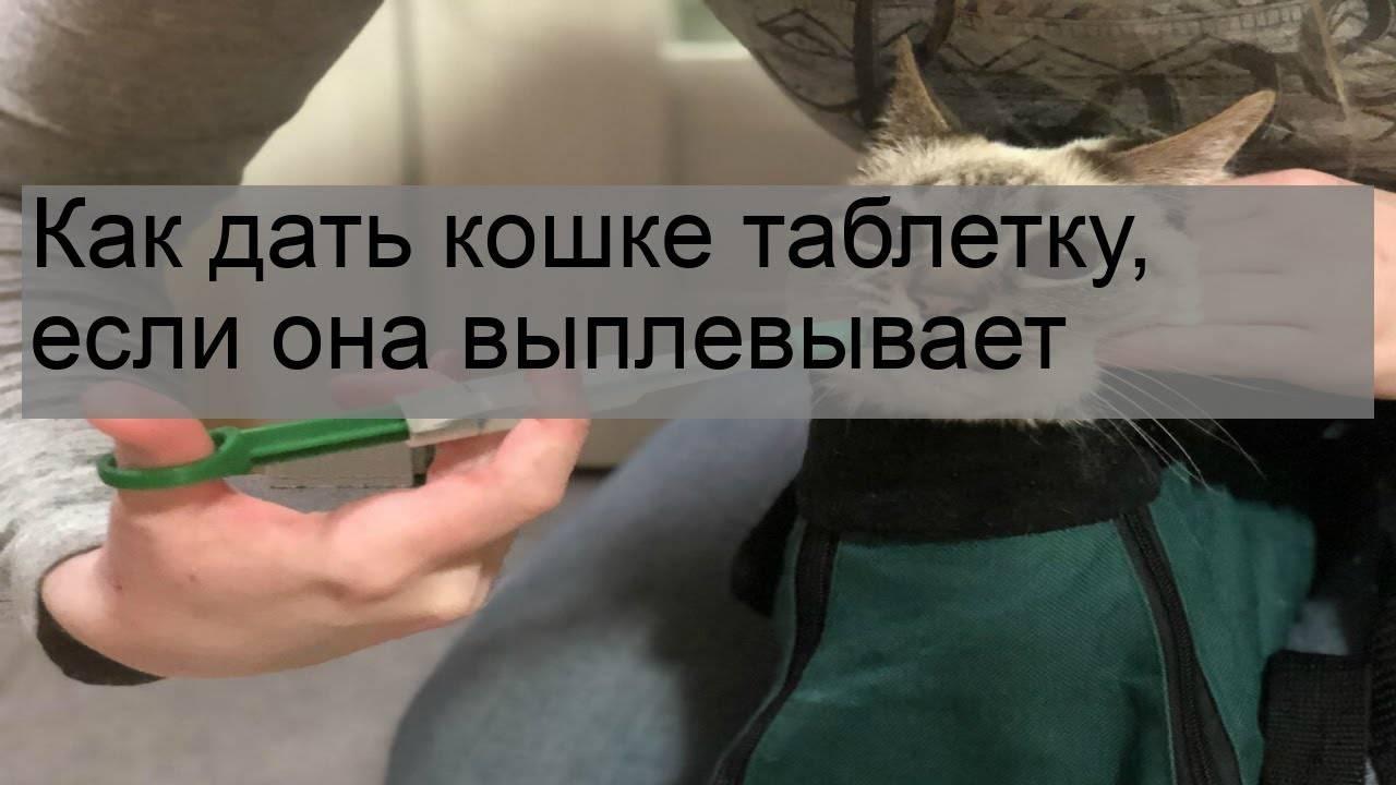 Как правильно кошке дать таблетки и капсулы