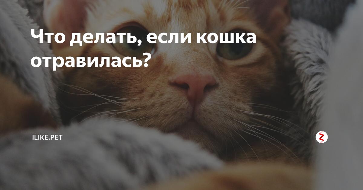 Что делать при отравлении котенка?