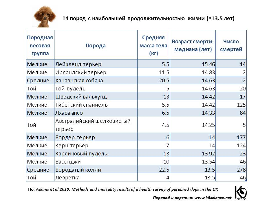 Сколько живут кавказские овчарки: продолжительность жизни, если собаки цепные и живут на улице, а также как ухаживать за питомцем