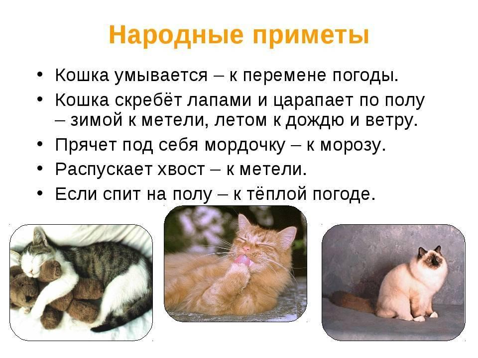Почему по приметам кошки не приживаются в доме