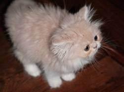 Как приучить котенка к имени: 5 этапов