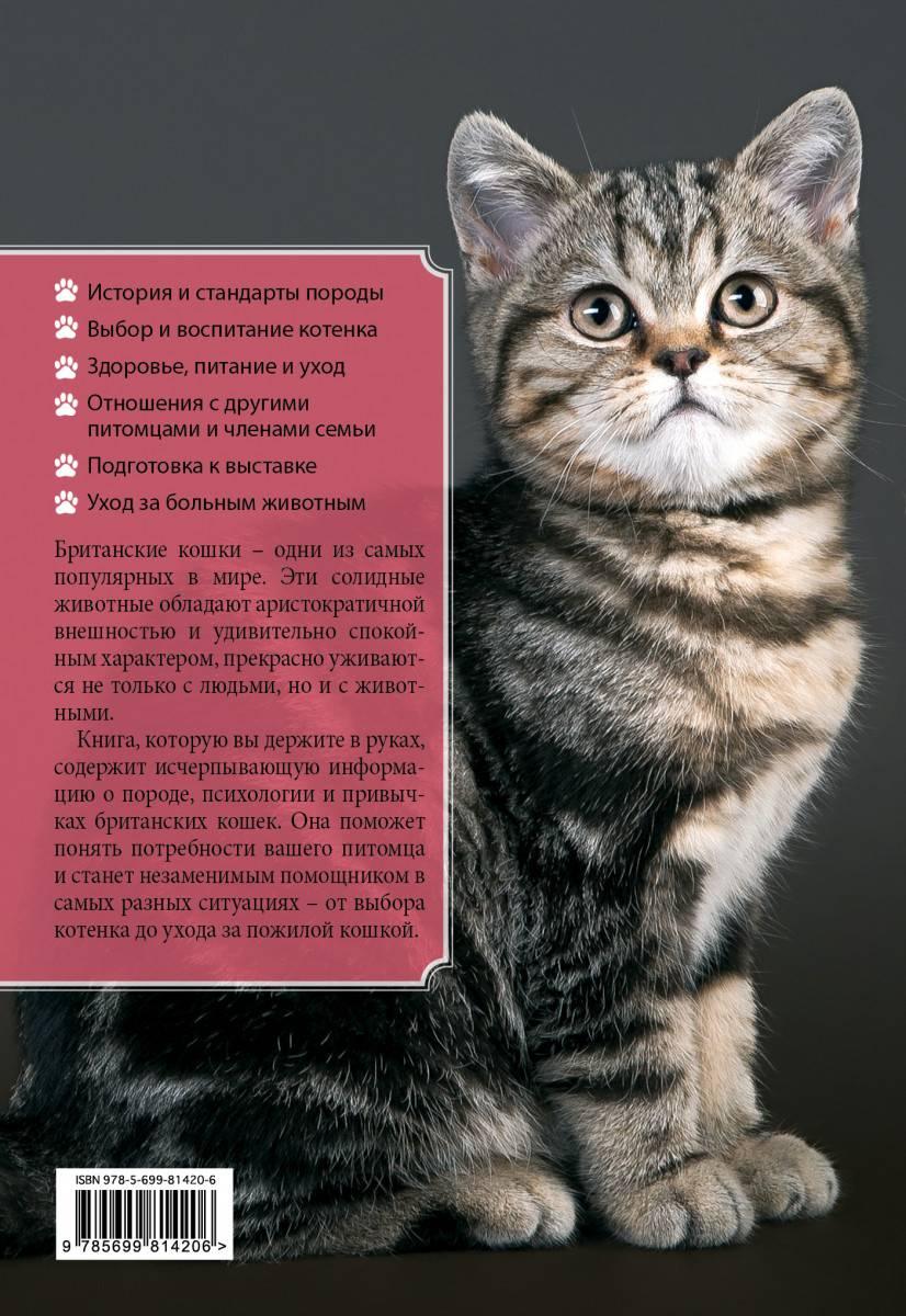 Европейская кошка: описание породы, характер, питание, здоровье