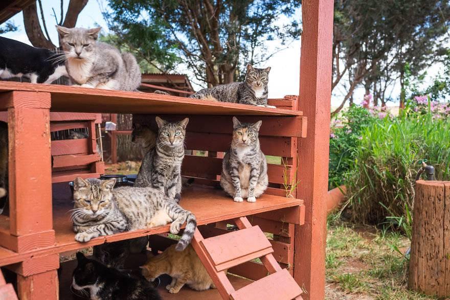 Сколько видов кошек на земле. сколько кошек в мире