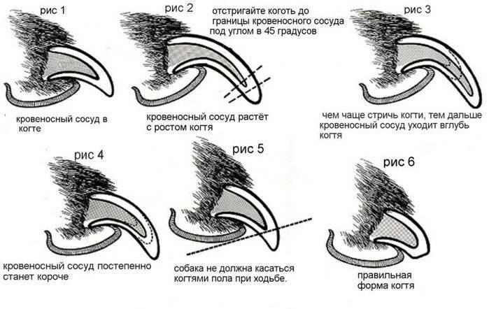 Как правильно стричь когти кошке специальными ножницами, гильотиной: нужно ли, можно и как часто, как провести процедуру?