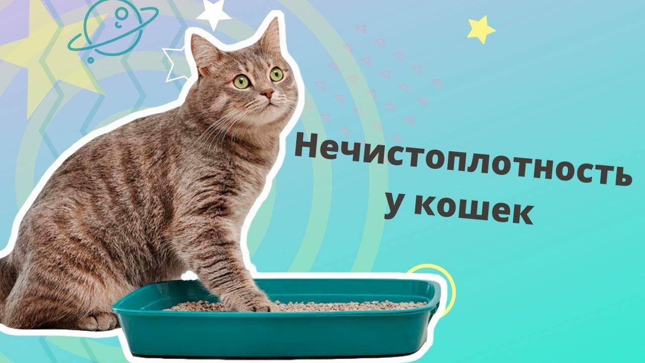 Почему кошки ходят мимо лотка