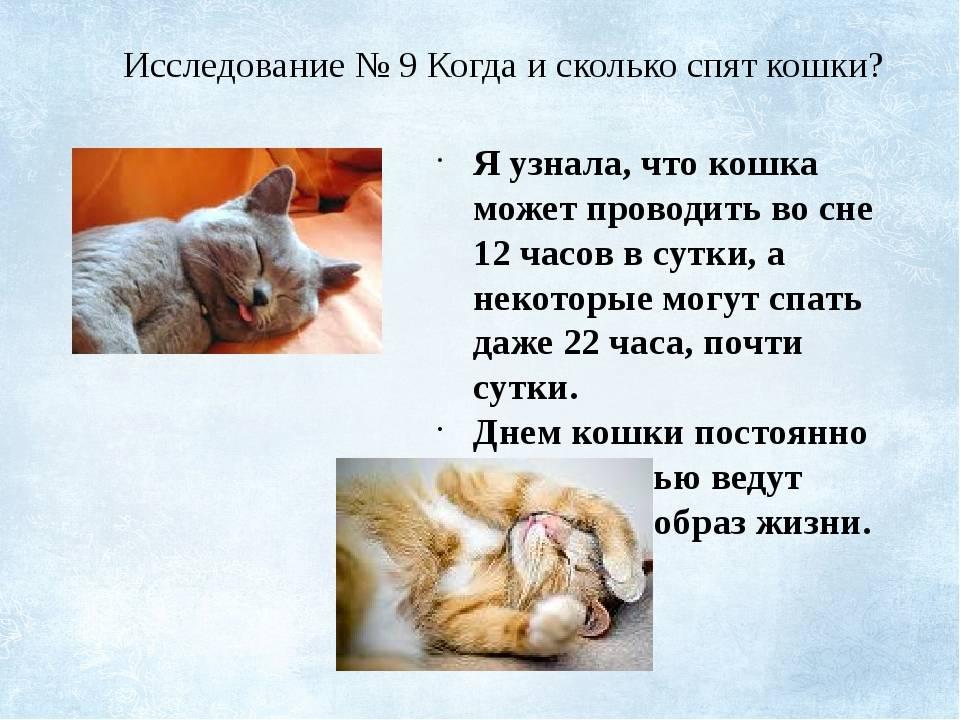 Сколько спят кошки. продолжительность сна у кошек