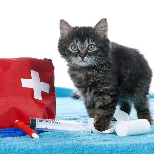 Ветеринарная аптечка для кошек и котов