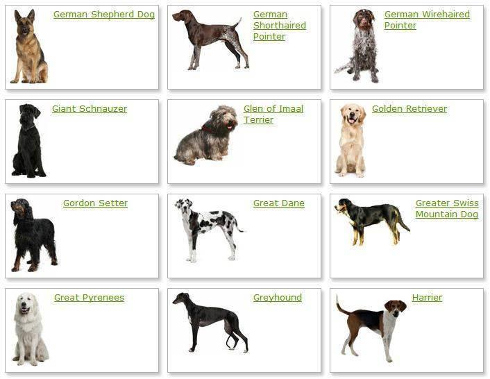 Средние породы собак: названия и фото (каталог)