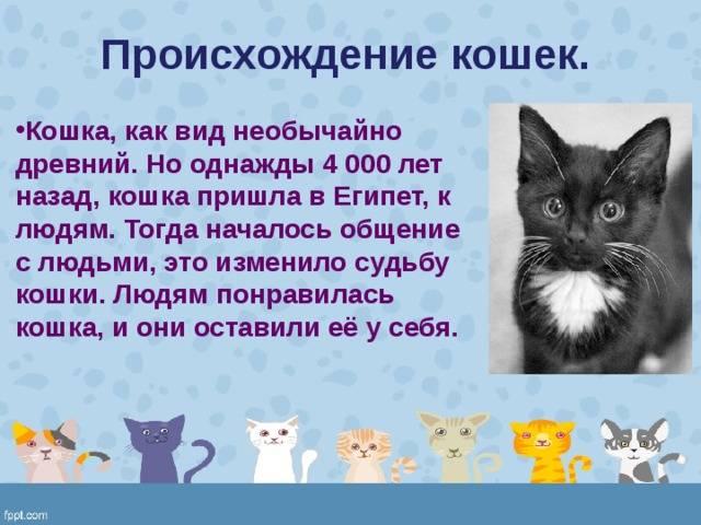 Одомашнивание кошек - как происходило одомашнивание кошек