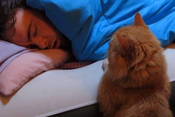 Котёнок мешает спать