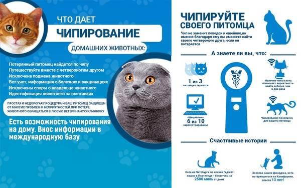 Чипирование кошек ?