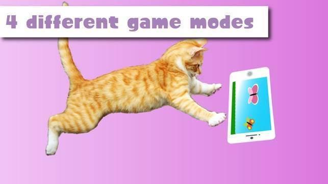 Видео для кошек на мониторе – развлечение для пушистиков