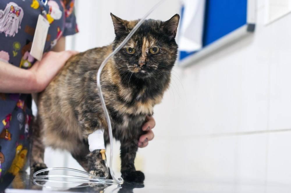 Физраствор для кошек: инструкция по применению