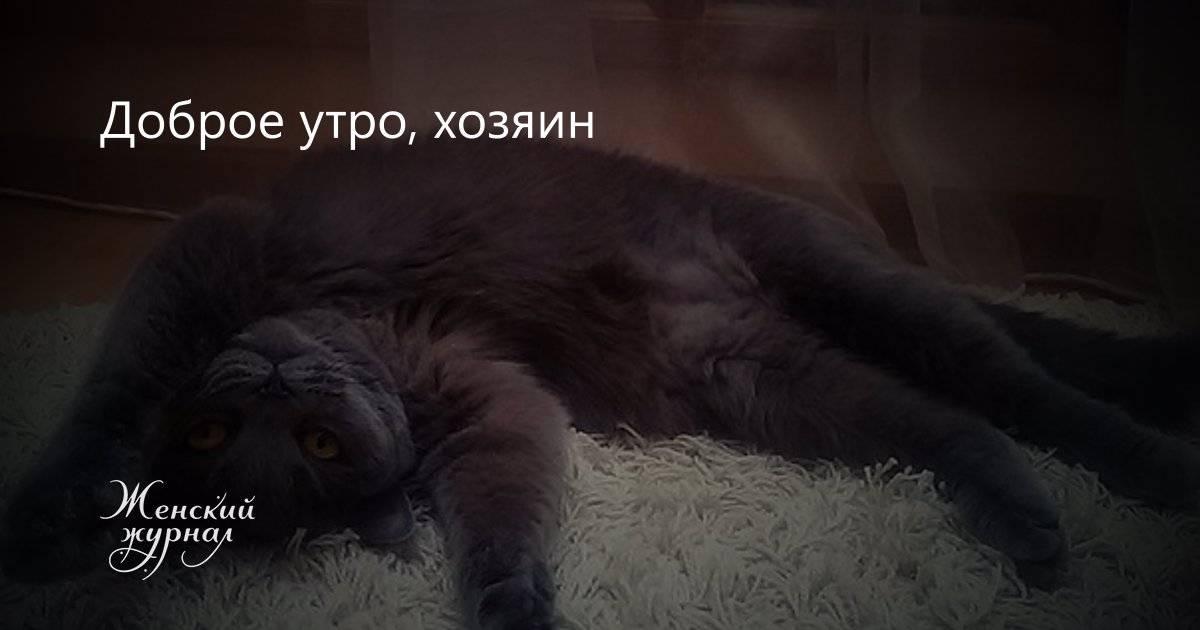 Любят ли кошки своих хозяев