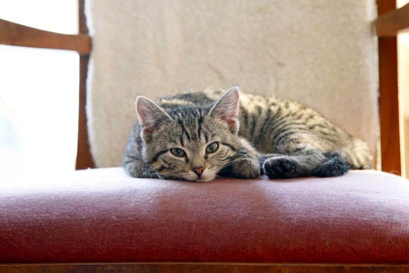 Можно ли оставить кошку на время отпуска? как оставить кота дома на время отпуска можно ли оставить кота на сутки