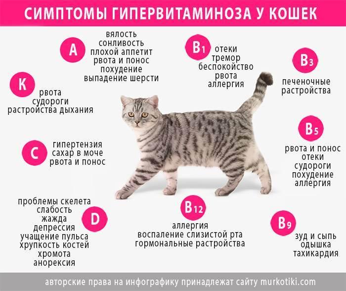 Авитаминоз (гиповитаминоз) у кошек - симптомы, лечение, препараты, причины появления | наши лучшие друзья