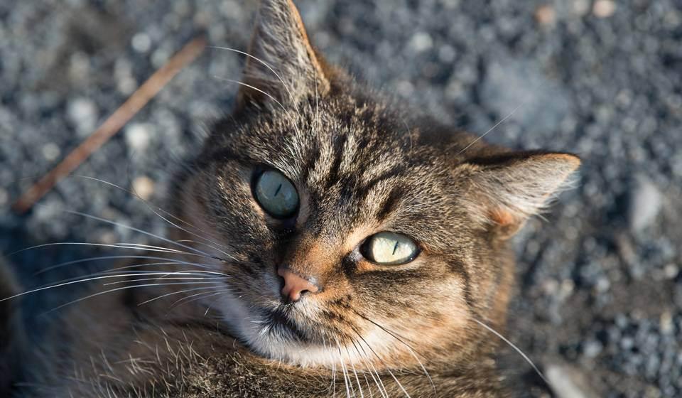 Кот не ест и дрожит. кот дрожит — полный список причин от ветеринара
