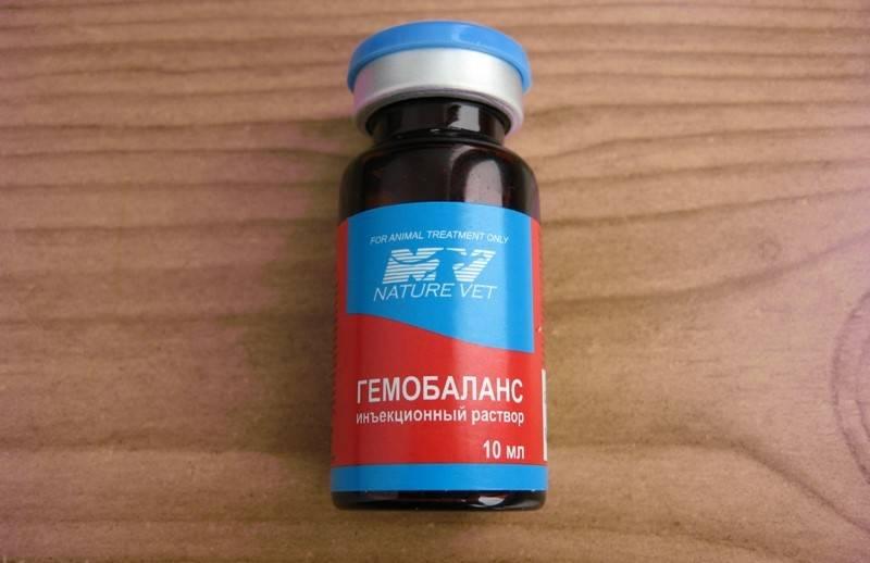 Гемобаланс: поливитаминный комплекс для кошек, способ применения и дозировка, противопоказания, отзывы, стоимость и аналоги