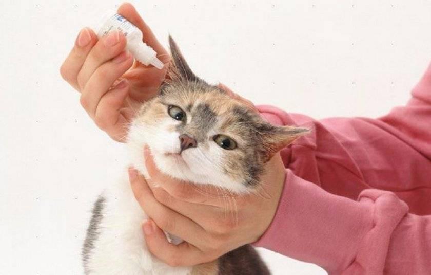 У кота болят уши лекарство