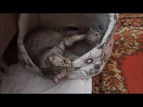 Подготовка места для родов кошки подготовка места для родов кошки