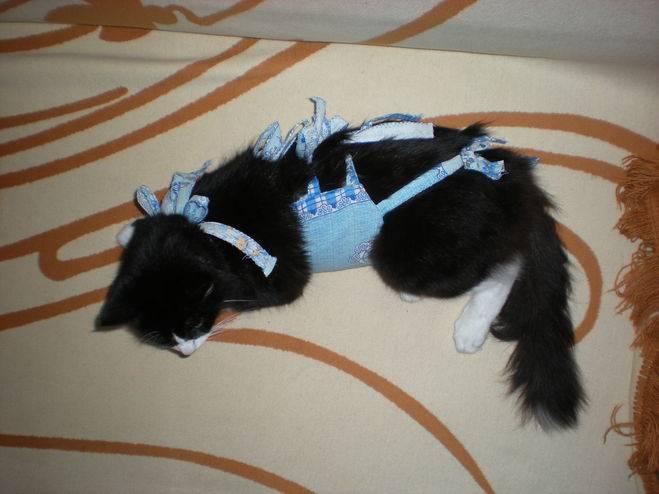 Когда снимать попону с кошки после стерилизации, как ухаживать за кошкой?