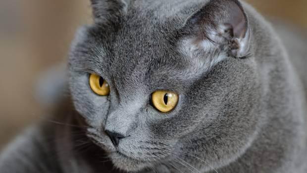 Обзор лучших препаратов от глистов для кошек