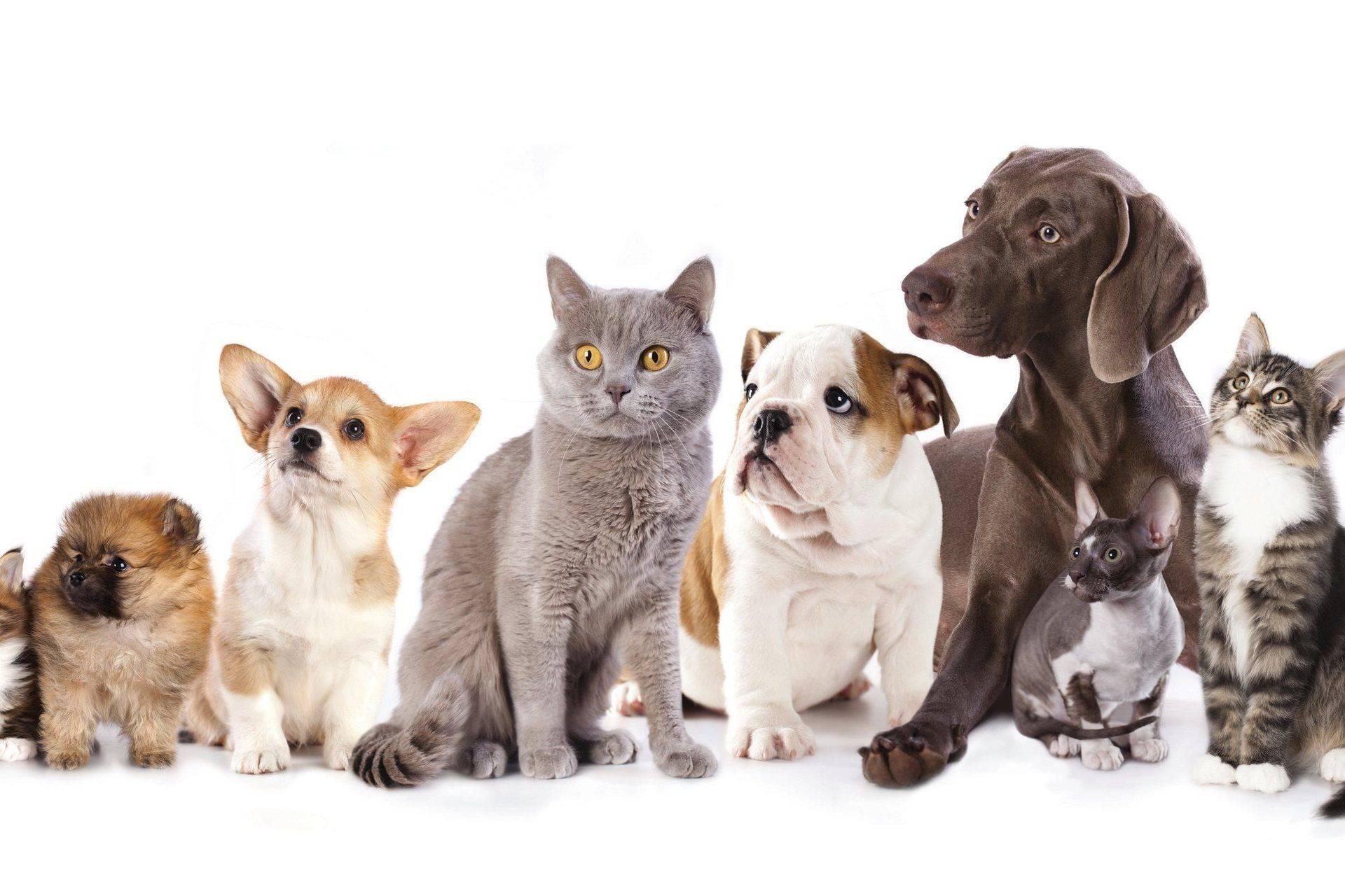 Какую породу кошек выбрать в квартиру, сельский дом, ребенку