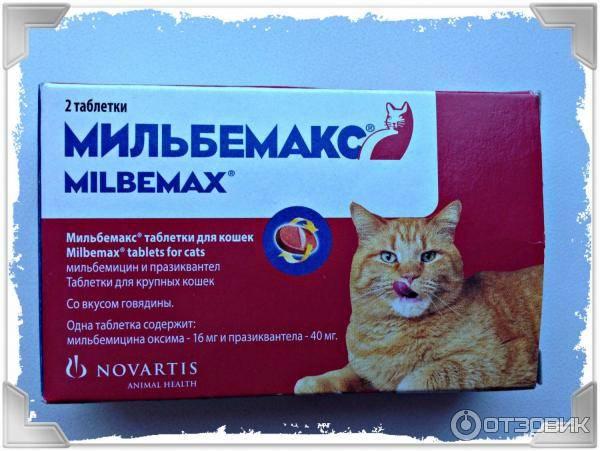 Мильбемакс для кошек – современное средство от гельминтоза