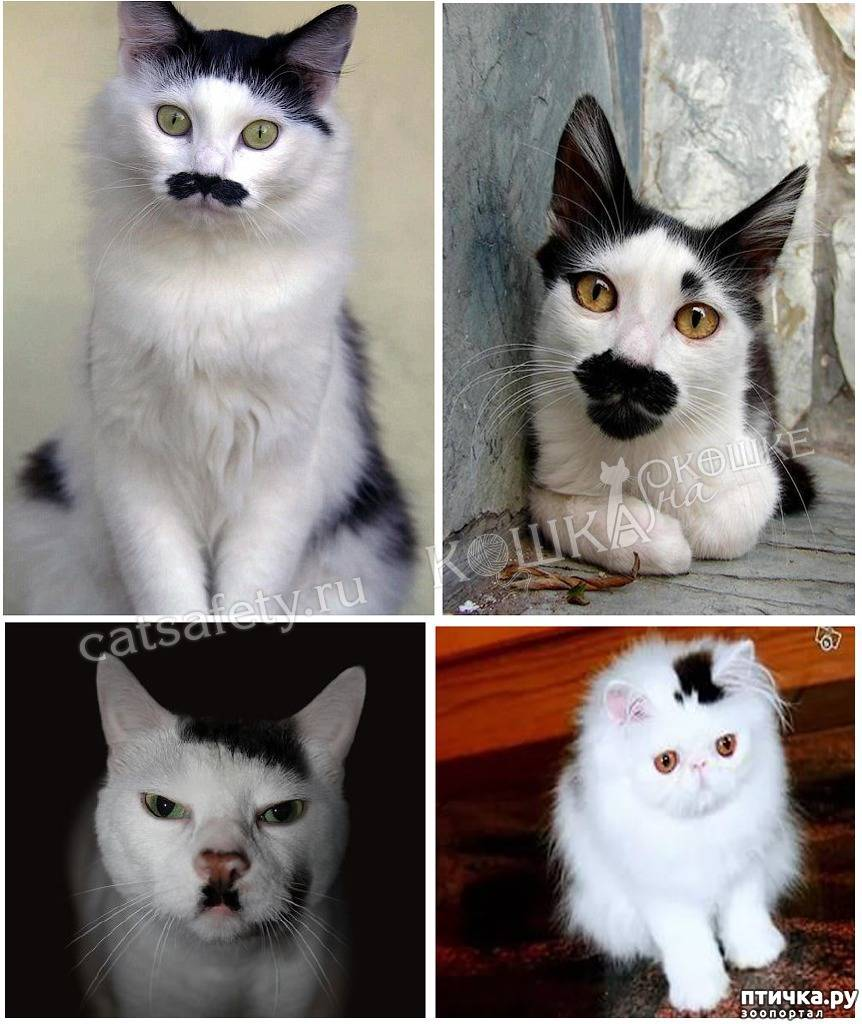 Самые необычные окрасы кошек
