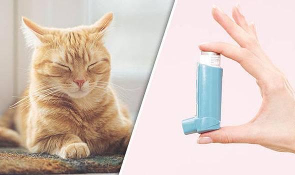 Кошка задыхается, хрипит и кашляет: почему так происходит, что нужно делать?
