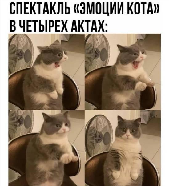 Кот орет по ночам - что делать и каковы причины кот орет по ночам - что делать и каковы причины