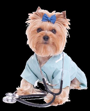 Вызов ветеринара на дом круглосуточно: особенности услуги