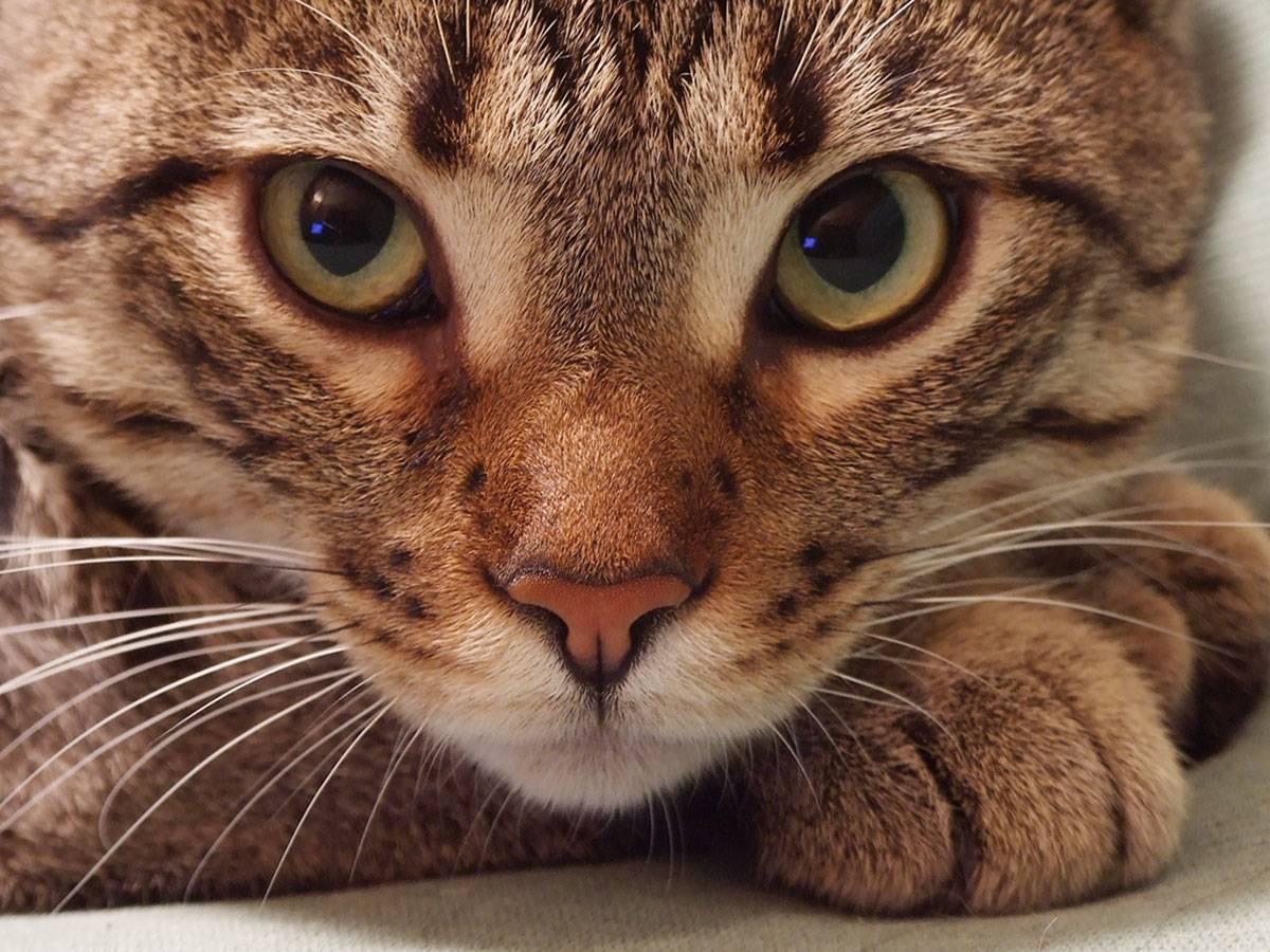 Какая память у кошек: долговременная, кратковременная