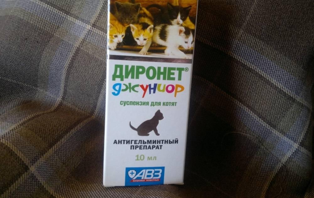 Диронет для кошек - видео инструкция по применению, 95 фото и видео как давать кошкам диронет