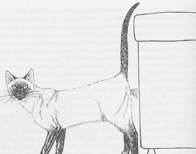 Кот метит в доме - когда начинает, почему и что делать