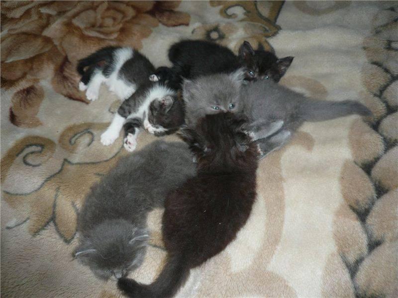 Когда можно отдавать котят, забрав их от кошки, в каком возрасте лучше всего это сделать?
