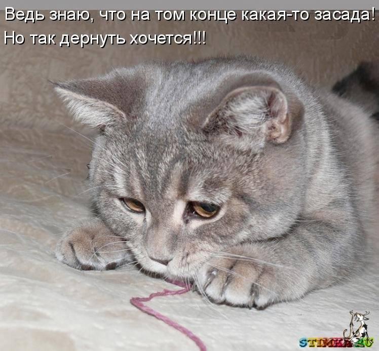 Почему кошка шипит на ребенка?